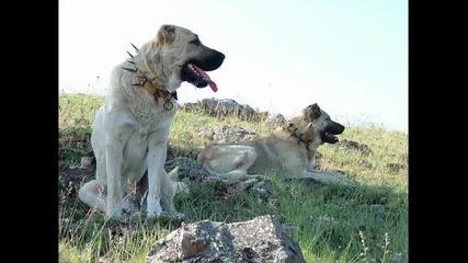 наи - опасните породи кучета