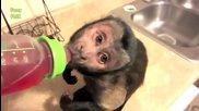 Забавни маймунски номера . . 2014