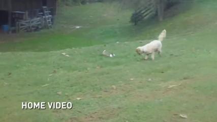 Приятелство между куче и заек