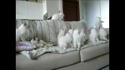 Сладки игриви котенца