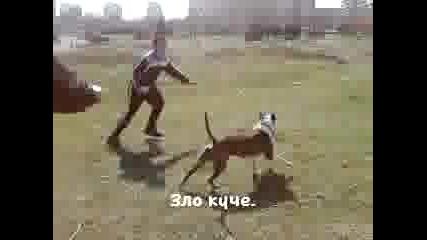 куче пука топка