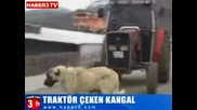 Турски кангал дърпа трактор