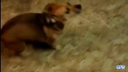 Компилация Смях ! - Dogs Getting Excited Over Food Compilation (720p)