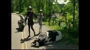 Taq Krava Neshte Da Umira
