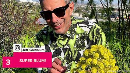 Джеф Голдблум е Кралят на Инстаграм на 68-години