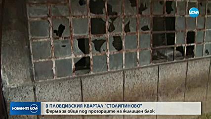 "Ферма с овце се появи между блоковете в ""Столипиново"""