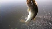 Ловене на риба с голи ръце