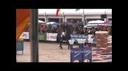 Dynamite - horses