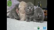 малки сладки котенца