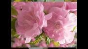 Честита Първа Пролет !