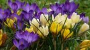 Пролетно желание