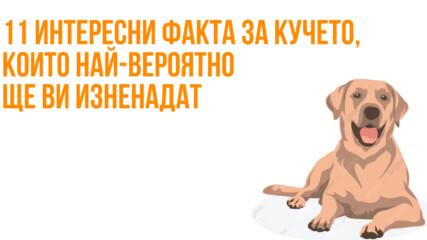 11 интересни факта за кучето, които най-вероятно ще ви изненадат