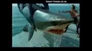 Акула изплюва човек !!!!