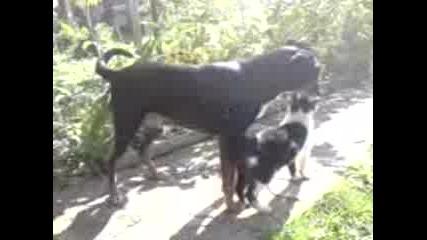 Richi i Macho ot Gramajdano