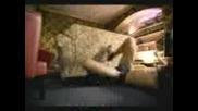 Reebok Escape The Sofa