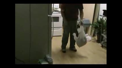 Cat And Bag.flv