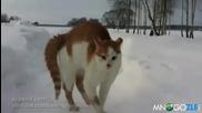 Страшното коте (смях)