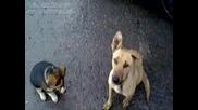 Куче Прахосмукачка