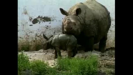 Индийски зоопарк приветства хипопотамче