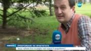 Призив към хората в България да спасят врабчетата