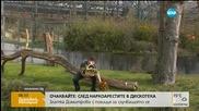 Дамата на зоопарка в Берлин става на 59 години