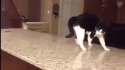 Коте махмурлия ... опитай да не се засмееш !!!