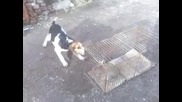 ловно кученце