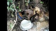 Много забавна маймуна мие чинии