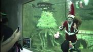 Mexico: 'Senorita Santa Claus' dives under water at Guadalajara Zoo aquarium