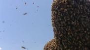 Мъж покрит със 100 хиляди пчели!