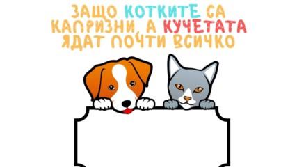 Защо котките са капризни, а кучетата ядат почти всичко