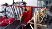 Забавен Папагал – Ара
