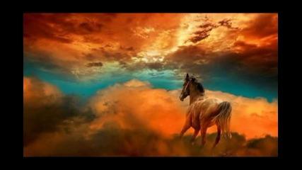 Дива Красота - Снимки и картини на коне