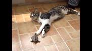 Котка и костенурка