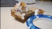 Сладки малки котенца