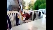 2 годишно дете прострелва баща си (случайно заснето)
