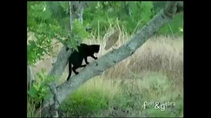 Черна Котка и Сова ~ Неразделни Приятели се Забавляват