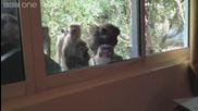 Макаци, гледат макаци по Planet Earth Live - Planet Earth Live