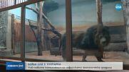 Бейби бум в Столичния зоопарк