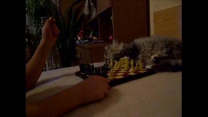 Соня шахматистка