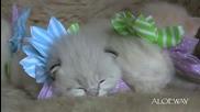 Котенца или цветя са тези сладури