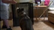 Куче се преструва на мъртво