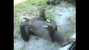 Смешни Маймуни