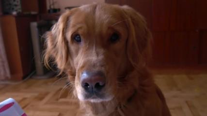 Животът С и БЕЗ куче