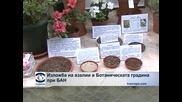 Изложба на азалии в Ботаническата градина на БАН