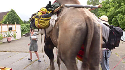 German village surprised by camel as duo hike from Poland to France with animal companion