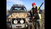 Лов на вълк в село Медовница