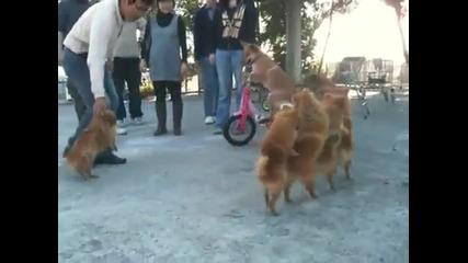 Тези кученца заслужават да се видят от всеки