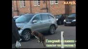Куче балансира на верига ( изумително ) !