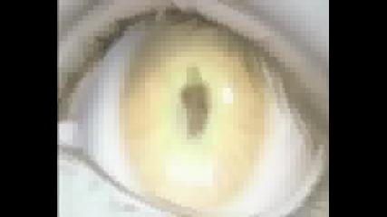 Final Fantasy VII Movie Trailer